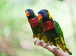 A couple of colorful parrot