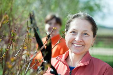 Female gardener cuts branches
