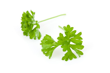 Two chervil sprigs