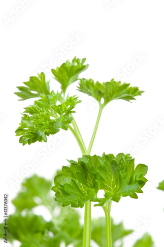 Close up of blurred chervil sprigs