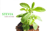 Stevia , sweetleaf, sugar substitute