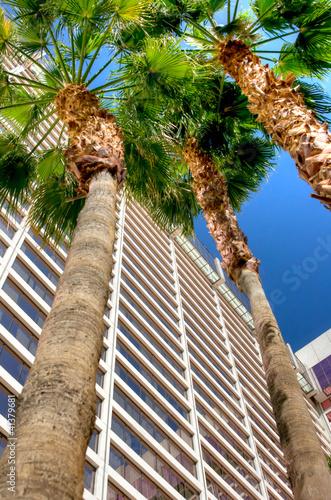Flamingo Hotel Las Vegas, Nevada