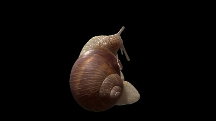 snail top isolated 01
