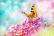 canvas print picture - butterfly on flower