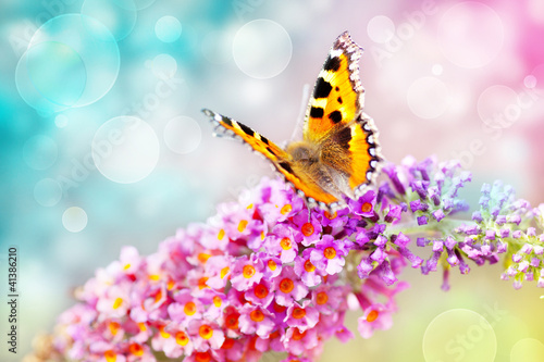 canvas print picture butterfly on flower