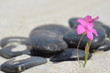 Fleur isolée sur la plage