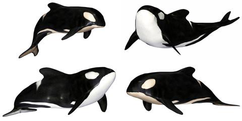 Killer Whale Pack