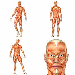 Male Human Body Anatomy Pack - 1of3