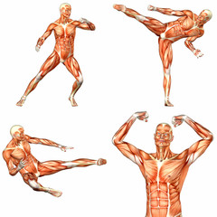 Male Human Body Anatomy Pack - 2of3