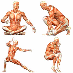 Male Human Body Anatomy Pack - 3of3
