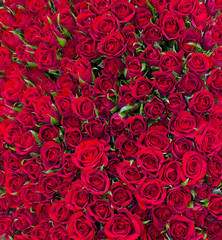 solid red roses background