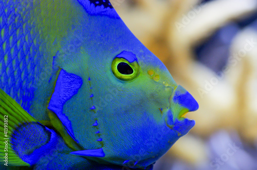 Poisson tropical bleu