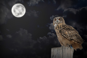 Gufo di notte
