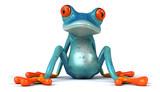 Fototapety Blue frog