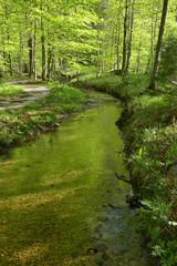 stream in spring .