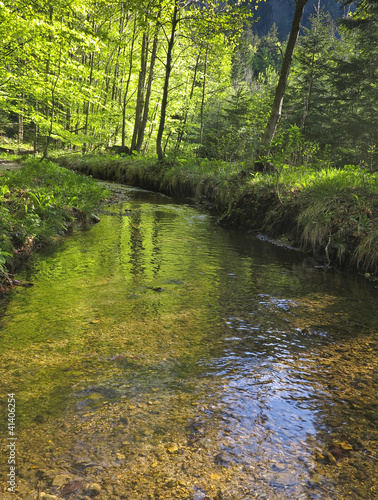 stream in springtime