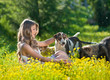 Happy and attractive teen girl playing with dogs in green field