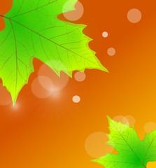Blätter beim Sonnenaufgang