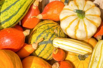 Bunte Kürbisse, Herbstmarkt, cucurbita, herbstlich, Saison