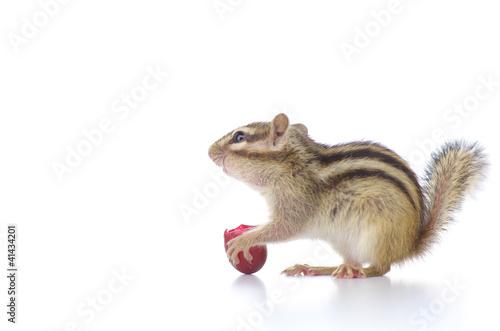 Plexiglas Eekhoorn 葡萄を食べるシマリス