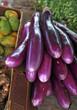 market eggplants