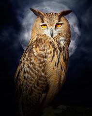 Bubo bubo eagle owl night bird full moon