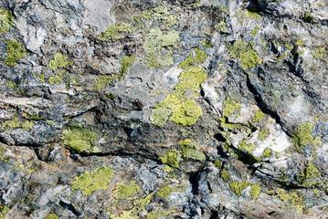 Rochers et lichens