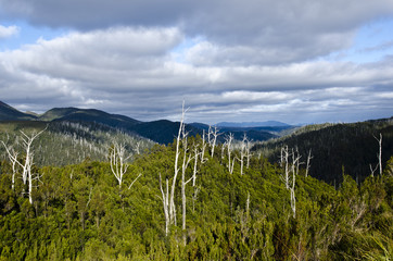 Cloud shadows over Tarkine forest, Tasmania, Australia