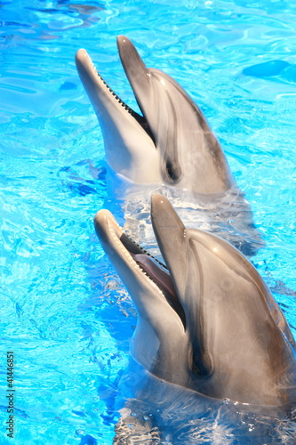Stock Image of Dolphins - Stock Photos Pictures Images Pics