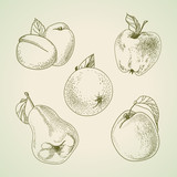 Set of vector vintage fruit, stylized drawing hands