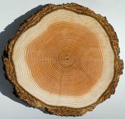 Jahresringe, Holzscheibe