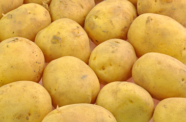 close up of arranged freshely harvested potatos