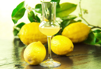 limoncello glass with fresh lemons