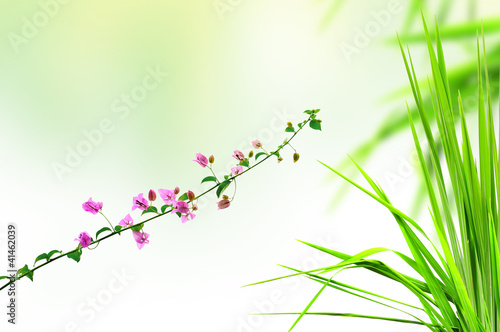 pink flower and fresh grass