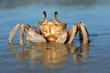 Leinwanddruck Bild - Ghost crab on beach