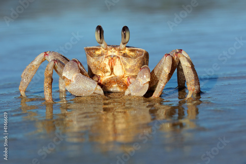 Leinwanddruck Bild Ghost crab on beach