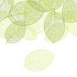 Fresh green leaves background - vector illustration - 41475097