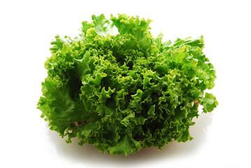 Cichorium endivia