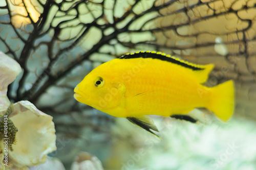 海底动物电鱼绘画作品