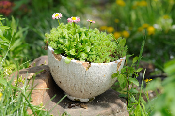 Old Cracked Pot with Flowers in the Garden