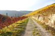 Weg durch die Weinberge