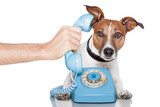 Fototapety dog on the phone with male hand