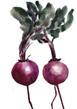 Watercolor illustration of red beets