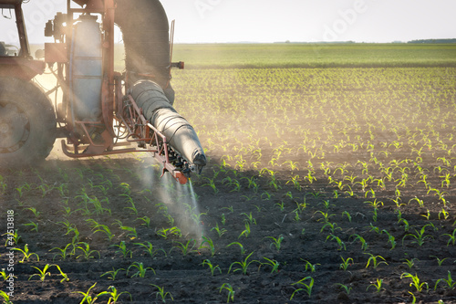 Tractor fertilizes crops corn