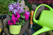 Frühling im Garten Kanne