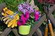 Garten Pflanzen Werkzeug