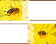 Honeybee banners