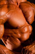 closeup of muscular man body