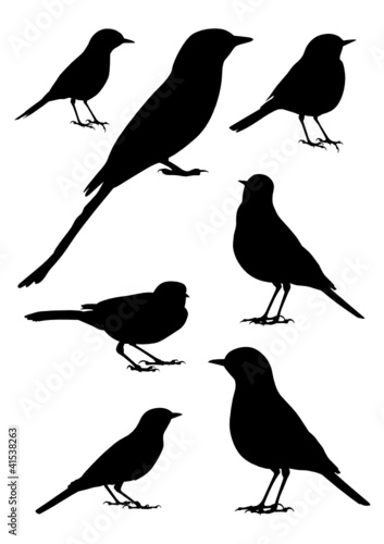 Birds Silhouette - 7 different vector illustrations