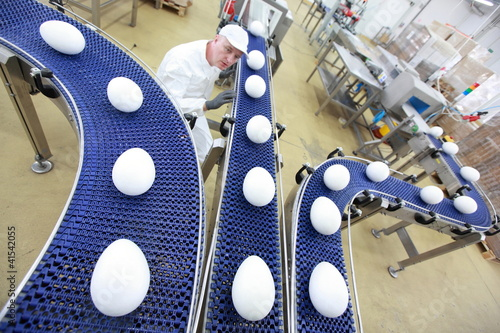 specialist at egg production line in gmo factory